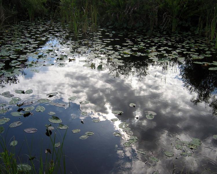 2008-Everglades_Shark Slough reflections