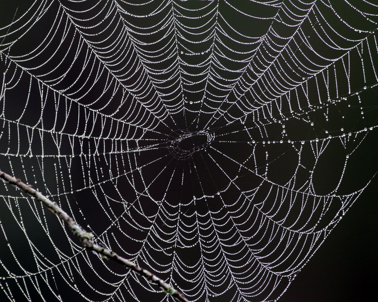 2008-spiderweb-Corkscrew Swamp