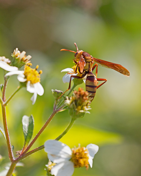 2018_ wasp-Emerson Point_Jan_IMG_0489