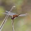 2016_carolina saddlebags_Circle B Bar Preserve_ FL_ Oct_IMG_7255