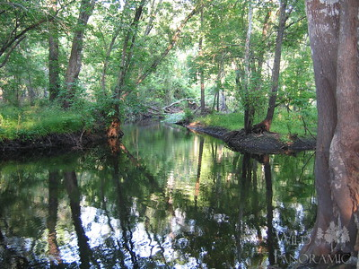 Flatwoods Nature Preserve