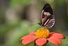 Madiera, Butterfly World, FL, 2005