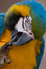 Dexterity, Parrot Jungle, FL, 2005