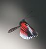 Down Beat, Butterfly World, FL, 2009