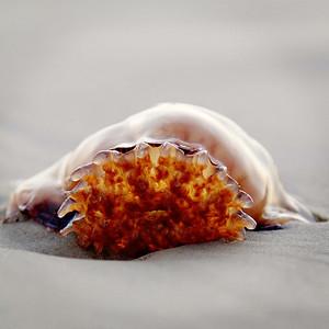jelly fish bit the dust b