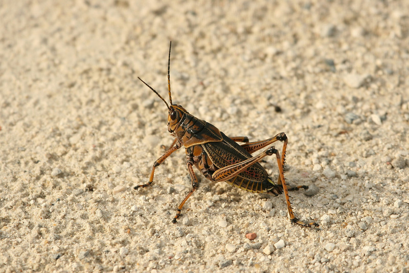 Grasshopper posed for his portrait
