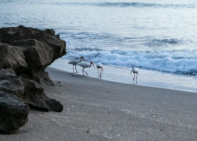 House of Refuge Beach071214036