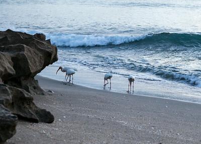 House of Refuge Beach071214035