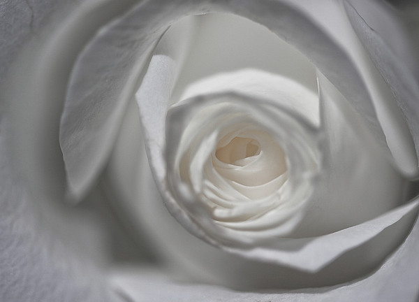 April 19, 2010 White Rose Macro