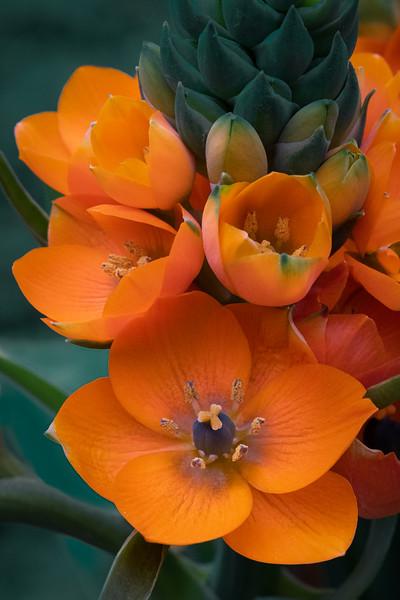 Flowers41919-451-Edit.jpg