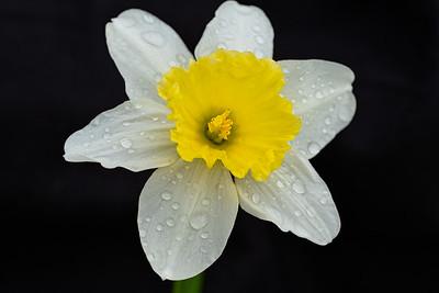 Flowers032820-117