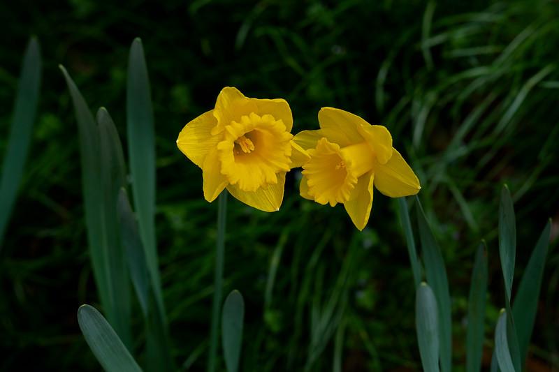 Flowers031120-168.jpg