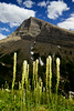 Bear Grass and Mount Grinnell - Vertical