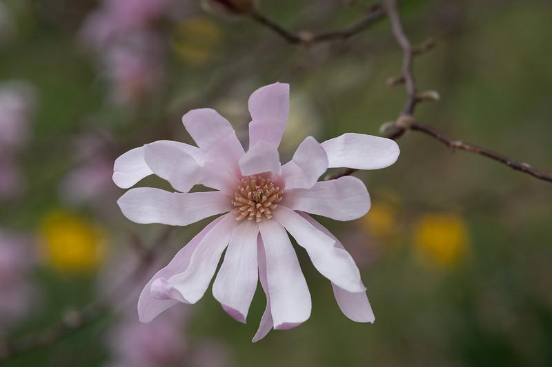 Flowers031220-119-Edit.jpg