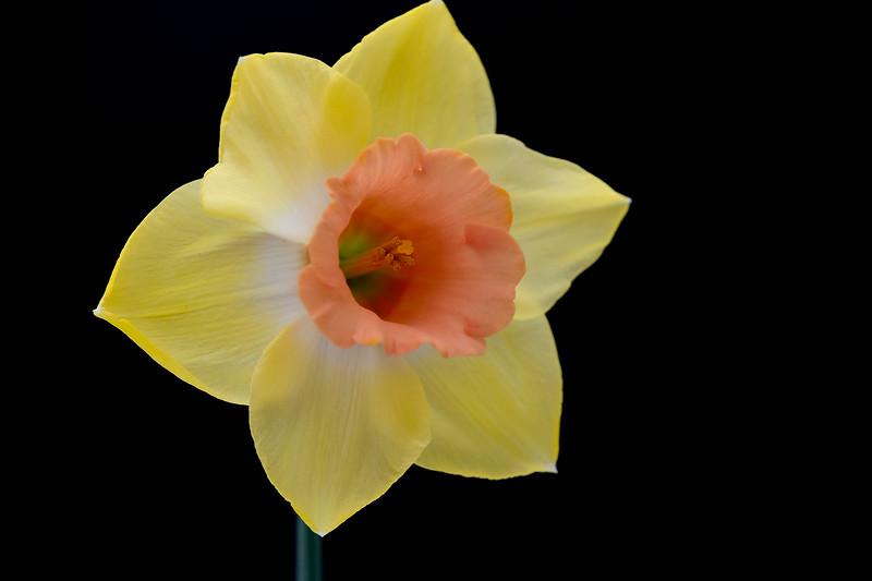 Flower032720-165.jpg