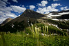 Bear Grass and Mount Grinnell - Horizontal