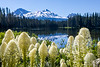 Lake Edge Bear Grass with Mountain Vista