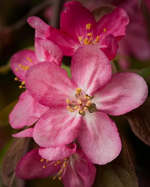Cherry_Blossoms_032012-192-Edit.jpg