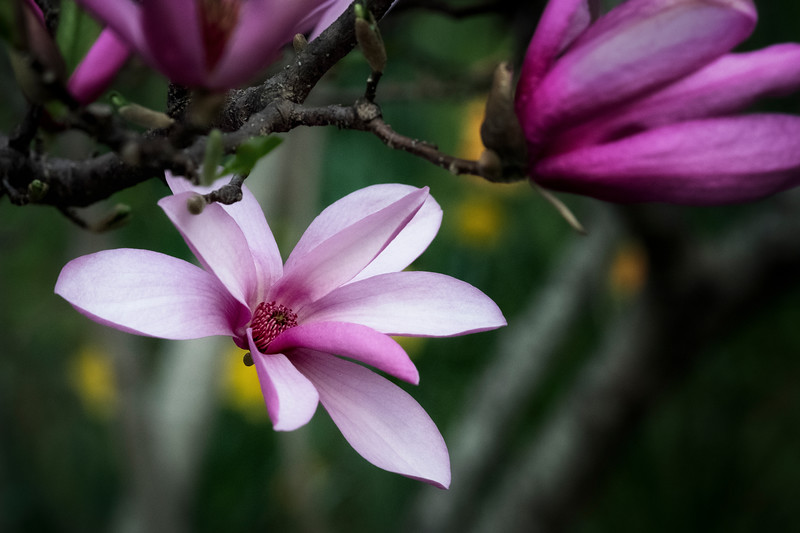 Flowers033019-1197.jpg