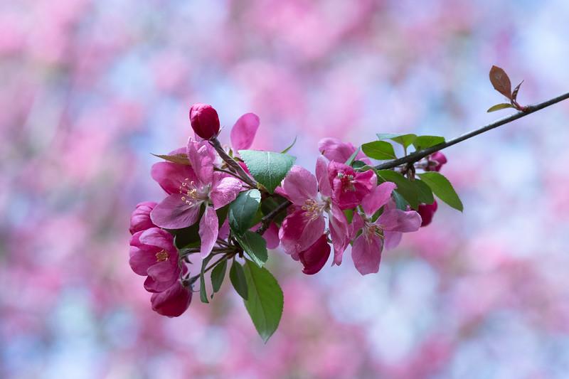 Flowers040619-456.jpg