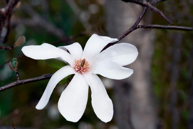 Flowers033019-1116.jpg