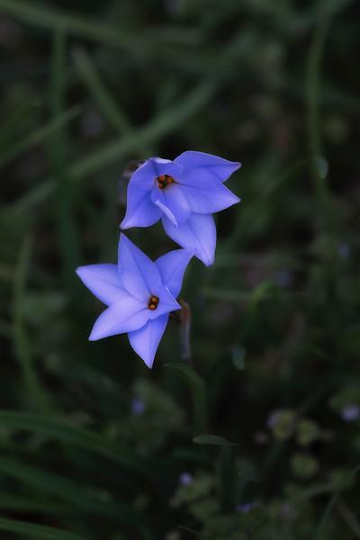 Flowers031220-83.jpg