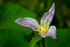 Trillium, Beautiful Decay