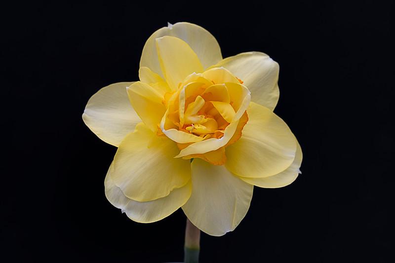 Flowers033120-60.jpg