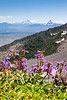 Lowly Penstemon with a Lofty View