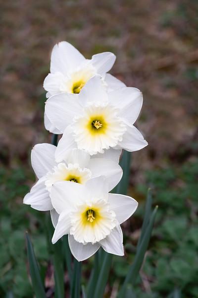 Flowers033019-1169.jpg