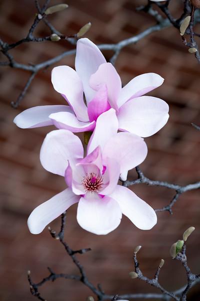 Flowers033019-781.jpg