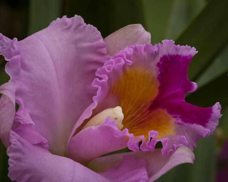 Flowers_03-16-11-538.jpg