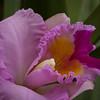 Flowers_03-16-11-538