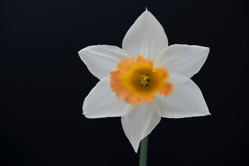 Flower032720-195.jpg