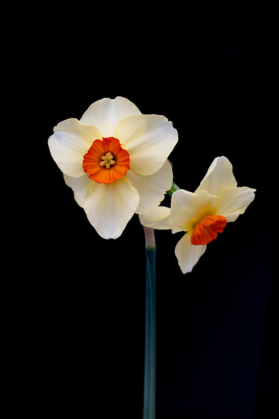 Flowers033120-4.jpg