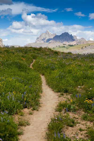 Teton Crest Trail, Wildflower Meadow