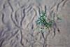 Sand Plant Macro