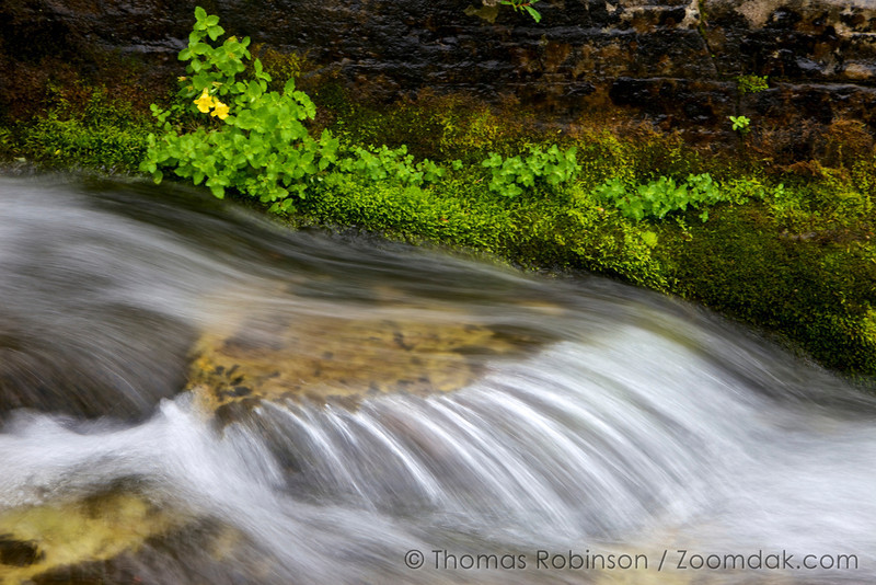 A rivulet water over the stones of Redgap Creek rushes on the way down to Lake Elizabeth in Glacier National Park, Montana. A stock of yellow monkey flowers (Mimulus guttatus) hangs above the waterfall.