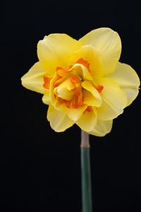 Flower032720-208-Edit