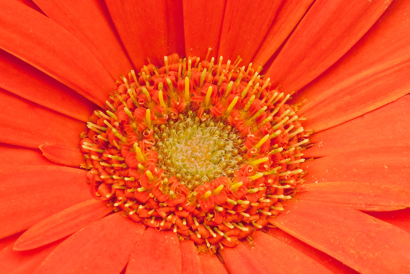 Graces_Garden_05-07-11-348.jpg