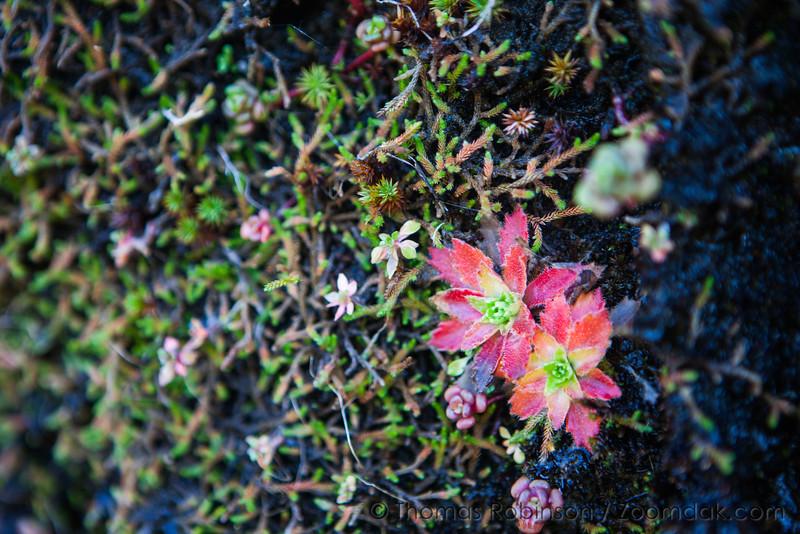 Colorful Plants on Angora Peak
