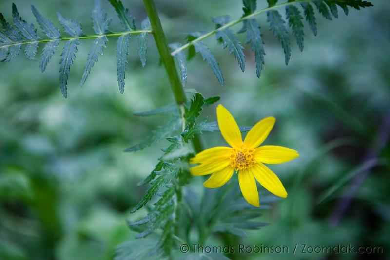 Colorado Photo: Yellow Flower