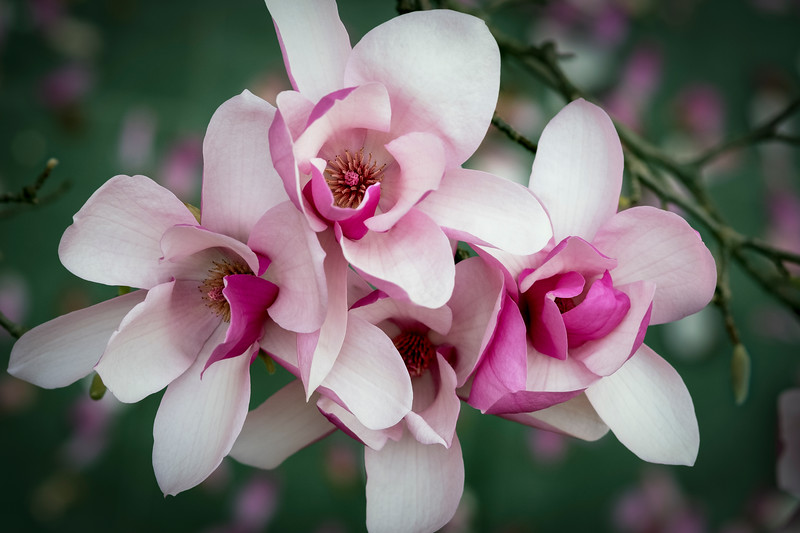 Flowers033019-787.jpg