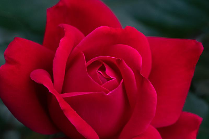 Flowers050320-82-Edit.jpg