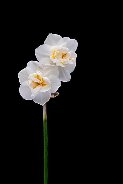 Flower032720-303.jpg