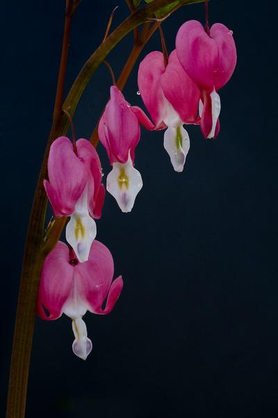 Flowers033020-73.jpg