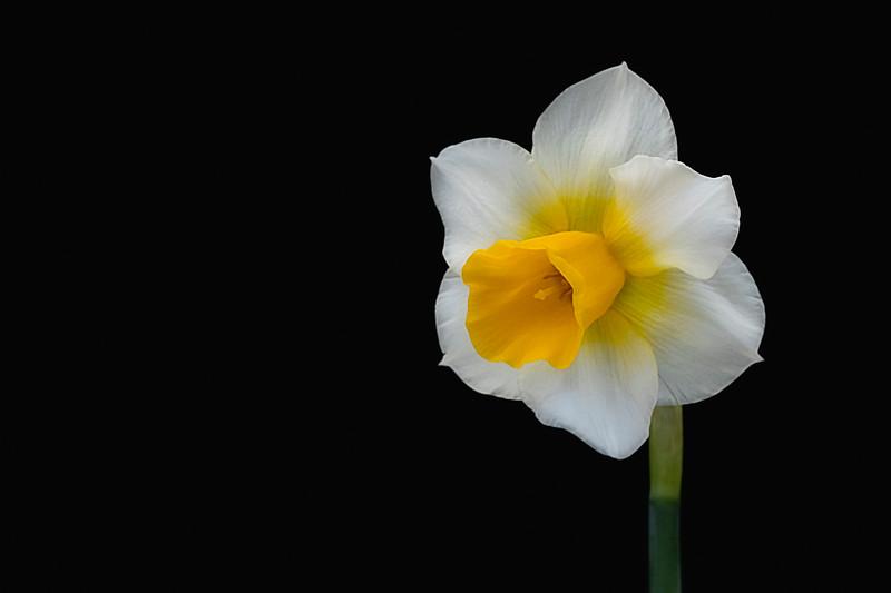 Flower032720-146.jpg