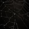 spiderweb_082010-7