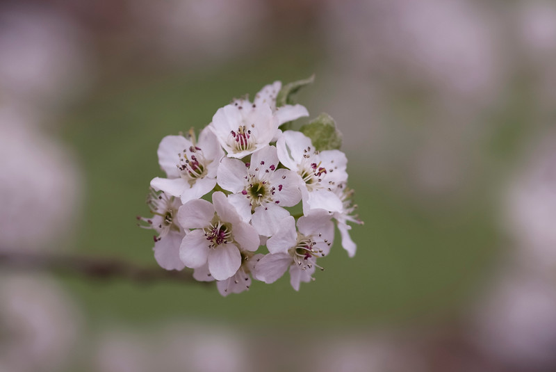Blooms040218-127