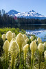 Bear Grass with Lakeside Mountain View